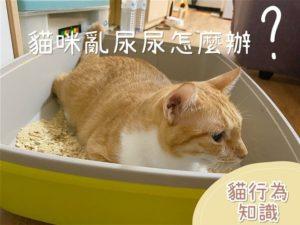 【貓行為知識】貓亂尿尿怎麼辦?絕對實用的應對措施|經驗分享