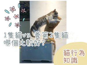 【貓行為知識】一隻貓就好?還是養第二隻貓更好呢?精華解析篇