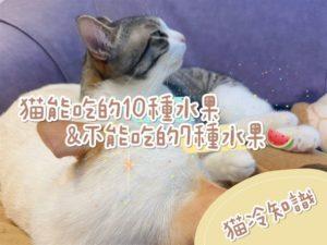 【貓冷知識】統整貓咪可以吃的十種水果,和不能吃的七種水果