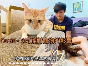 Covid-19可能對寵物的影響有哪些?貓狗家長,非常時期的應注意事項。