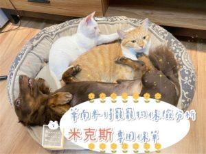 【華南米得寵寵物保險推薦】養米克斯的朋友有福了,CP值很高的選擇