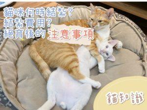 貓咪何時結紥?多少錢?結紥的優點和其注意事項【貓奴必看知識】