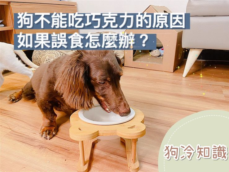 狗不能吃巧克力的原因?如果誤食該怎麼辦?【狗冷知識】