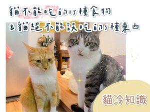 統整貓咪不能吃的十五種食物,和絕不能誤吃的五樣東西【貓冷知識】
