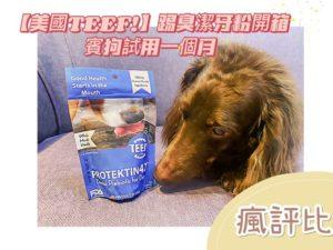 狗狗口臭怎麼解?【美國TEEF!】踢臭潔牙粉開箱-賓狗試用一個月評價