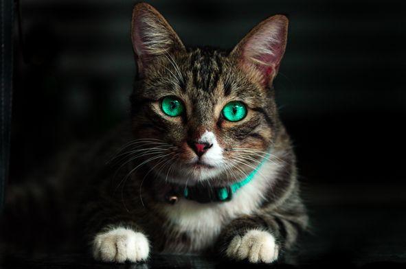 貓中毒急救