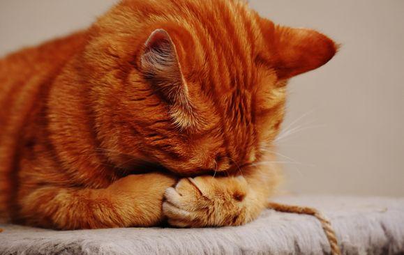 貓中毒的原因